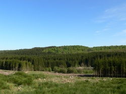 Visite guidée gratuite de la réserve naturelle de Wisembach ce samedi 19 juin