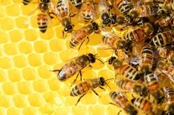 La commune lance son rucher communal